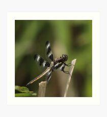 Dragonfly Reads Morning Newspaper Art Print