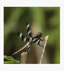 Dragonfly Reads Morning Newspaper Photographic Print