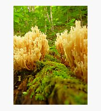 Fungus Corridor Photographic Print
