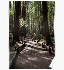 Armstrong Redwoods Poster