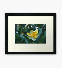 yellow eruption Framed Print