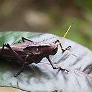 Locust by godtomanydevils
