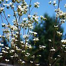 Back road wild flowers by Rainydayphotos