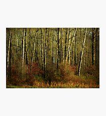 Fall Trees Photographic Print