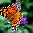 The Painted Lady by Arla M. Ruggles