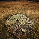 A Rock in a Paddock. by Garth Smith