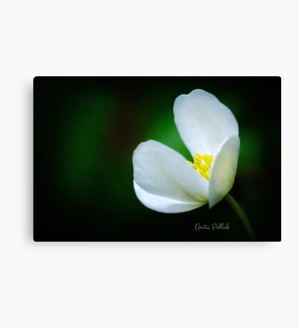 Embracing the Light Canvas Print