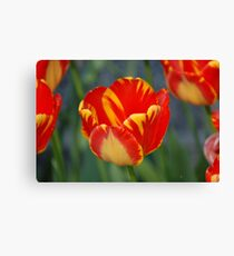 Yellow/Red Sunshine Canvas Print