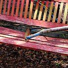 Old Bench by WildestArt