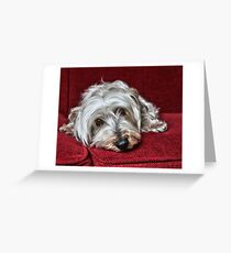 Pepper the Silky Terrier Greeting Card