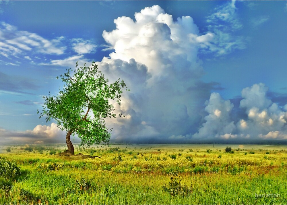 Lonely tree by harietteh