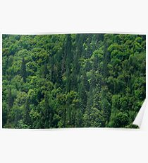 Nature Pattern on Palms Poster