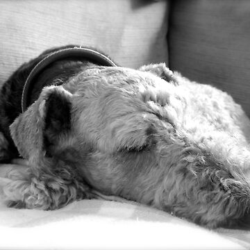Let Sleeping Airedales Lie by shutterhappy