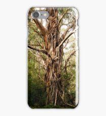 Stringy Bark Gum iPhone Case/Skin