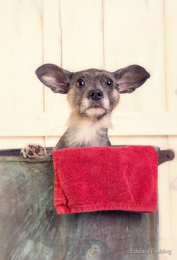 Puppy Bath Time by Edward Fielding