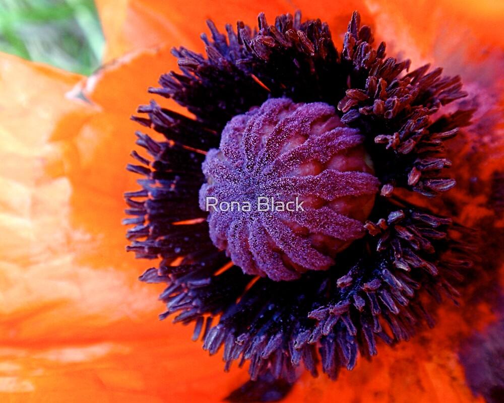 Poppy by Rona Black