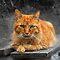 Ginger striped cat Challenge
