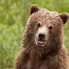 Young Grizz by Marty Samis