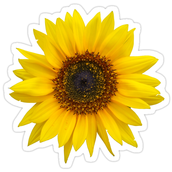 Quot Sunflower Quot Stickers By Ghjura Redbubble
