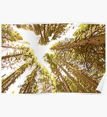 Colorado Rocky Mountain Forest Ceiling Poster