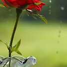 Blood Red Rose by jroch