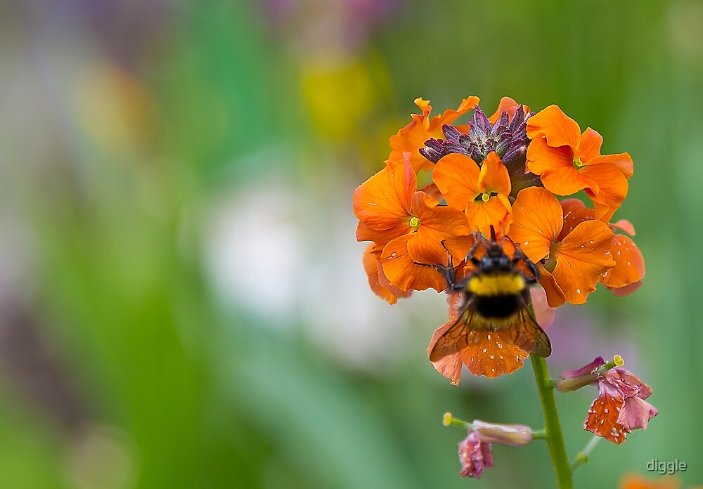 Bumble Bee by diggle