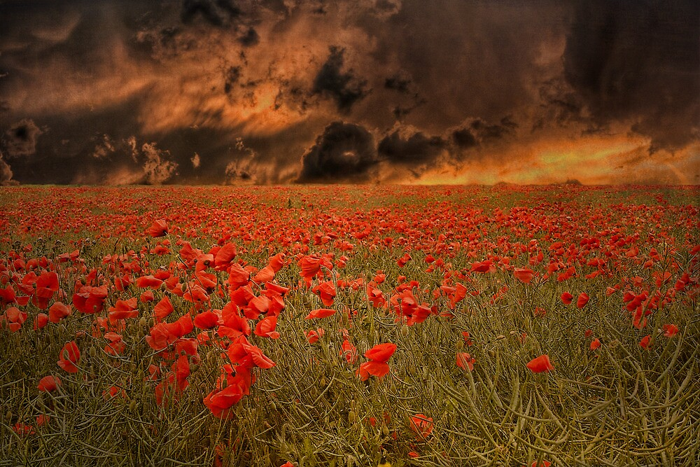 Field Of Fire by Dave Godden