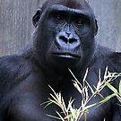 A Gorilla's Portrait by Gayle Dolinger