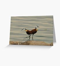 African Jacana Greeting Card