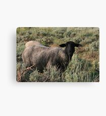 THIS MUST BE THE BLACK SHEEP OF THE FAMILY Canvas Print