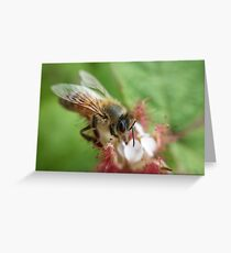 A well crafted bee on a raspberry flower Greeting Card