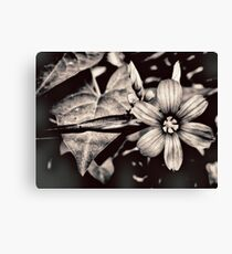 heirloom Canvas Print
