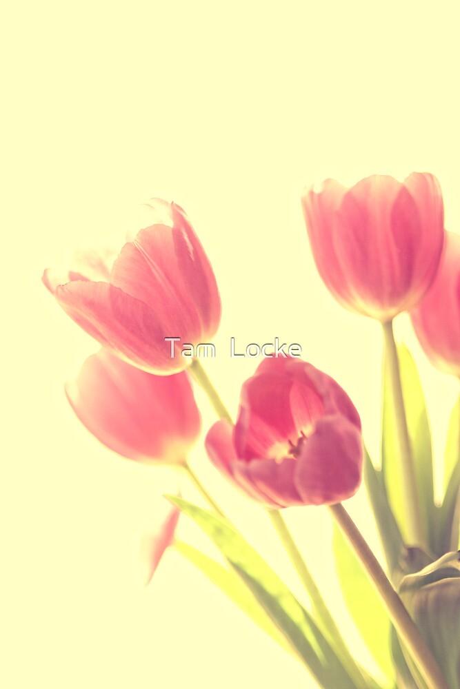 Tulips in high key by Tam  Locke