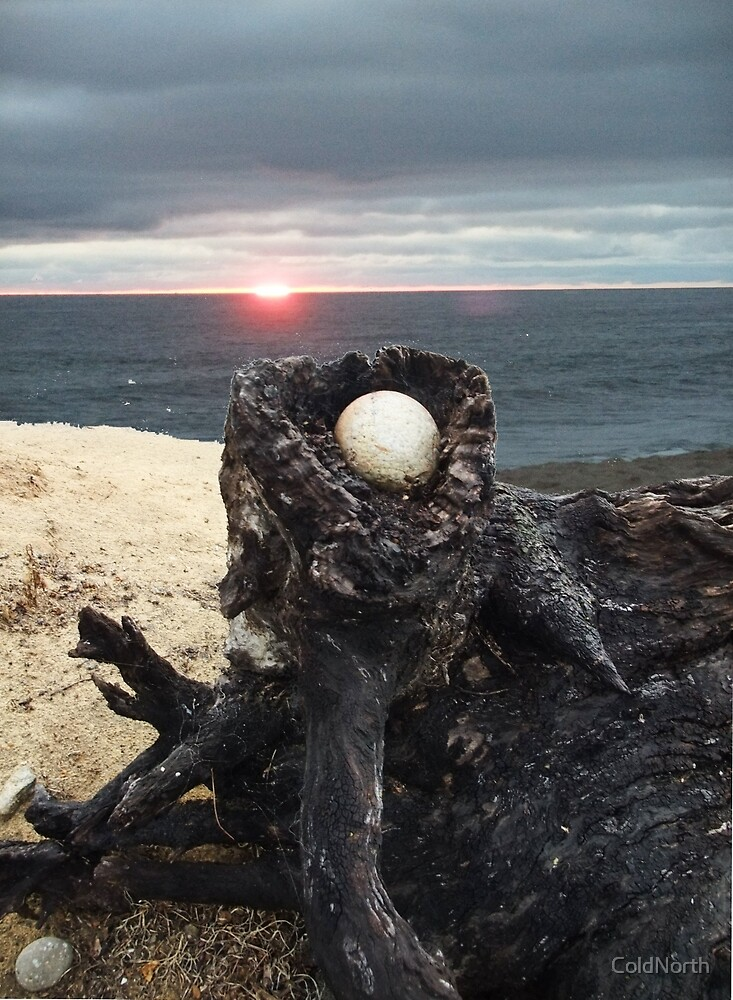 Egg Stone in Tree Stump by ColdNorth