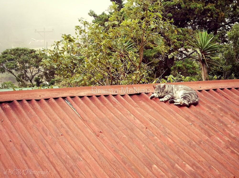 Cat on a Hot Tin Roof by Briana McNair