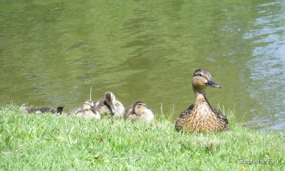 Duck Family by Stephanie Fay