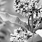 Tiny Flowers II  by DearMsWildOne