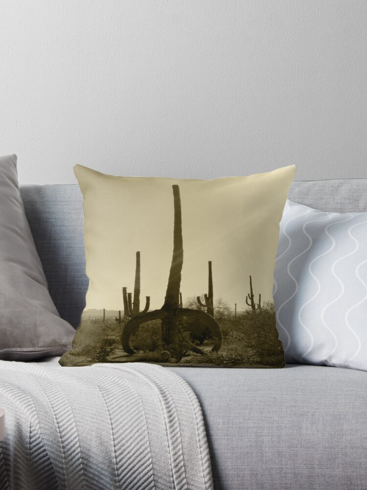 SAGUARO NATIONAL PARK TUCSON ARIZONA MAY 2011 by photographized