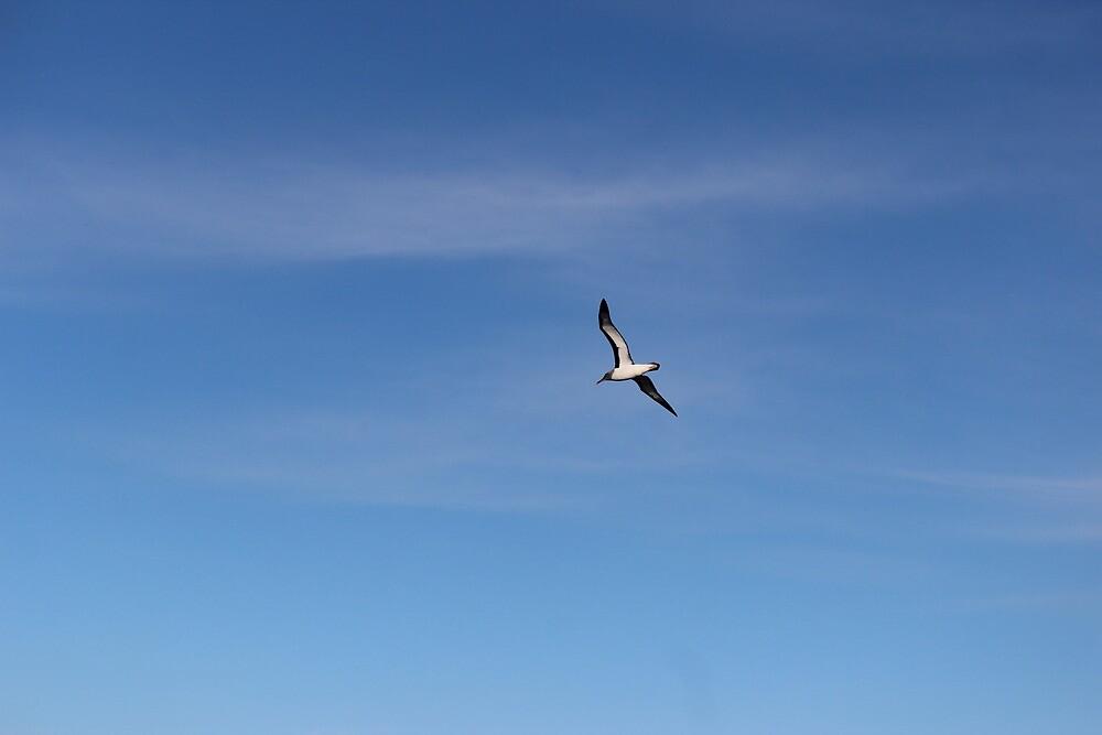 albatross  by gaylene