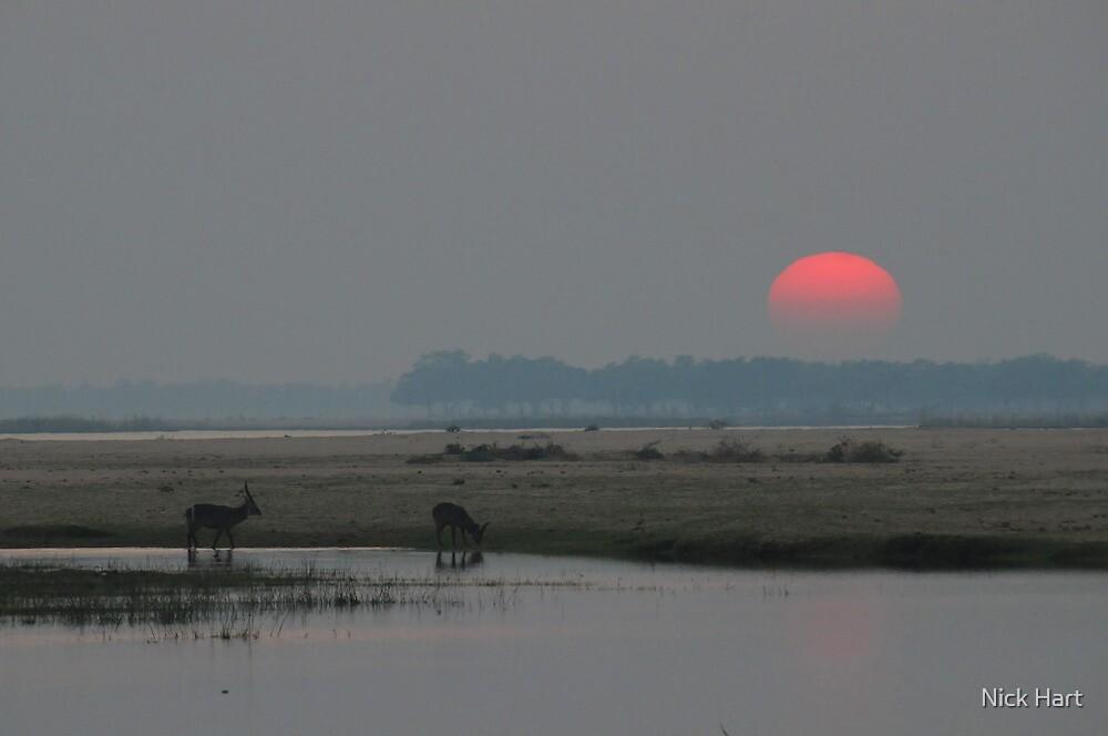 Waterbuck Sunrise by Nicholas Hart
