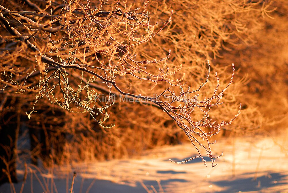The frost and the sun by Kirill Mazanik