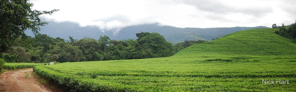 Tea Estate by Nicholas Hart