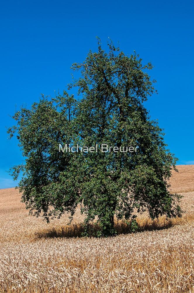 Pear Tree in a Field of Grain by Michael Brewer