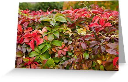 Fall foliage in Copenhagen by renprovo