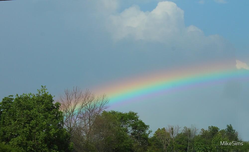 rainbow by MikeSims