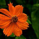 Dew and Flower by gaurav0410