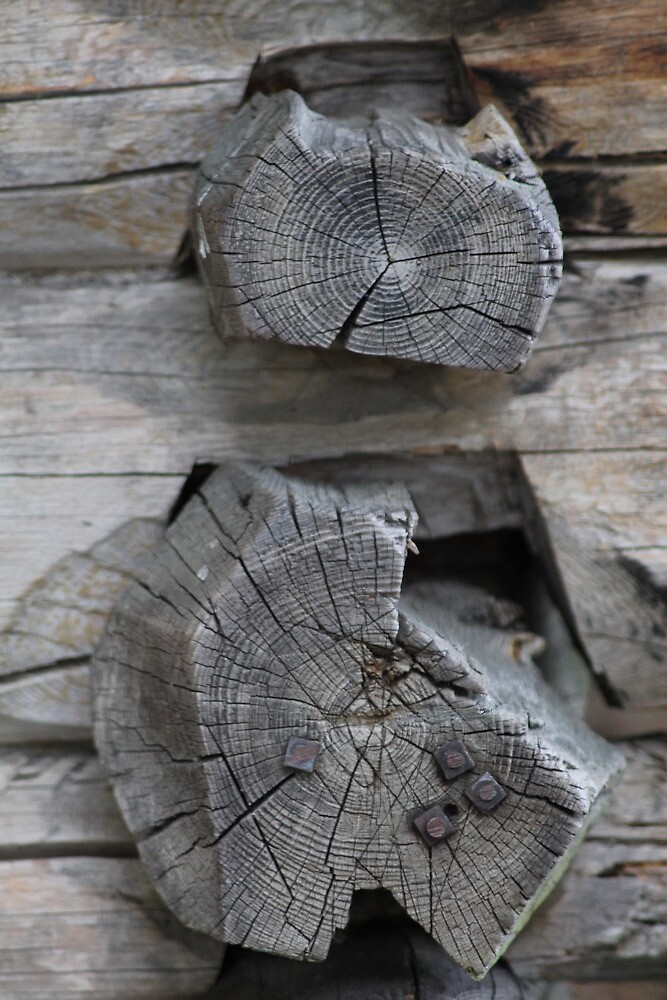 Detail of old log house by UpNorthPhoto