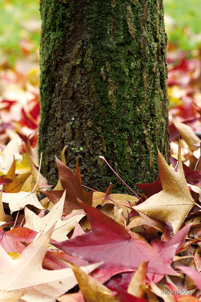 Autumn Tree Trunk And Leaves by moonbloom