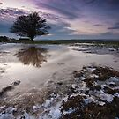 lone tree by willgudgeon