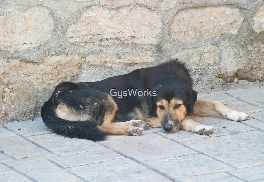 Stray Dog by GysWorks